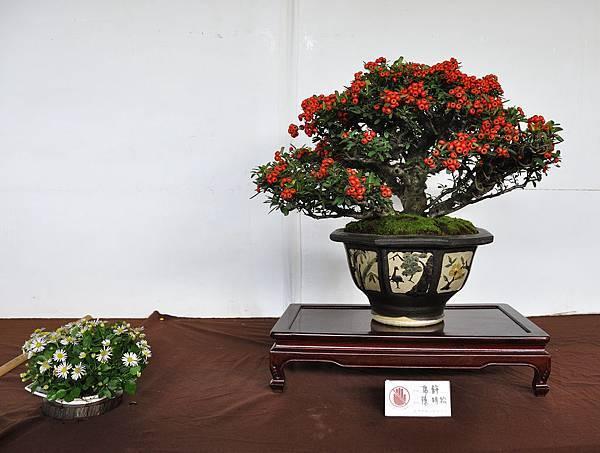 2018台中盆栽展_00184.jpg