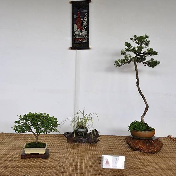 2018台中盆栽展_00185.jpg