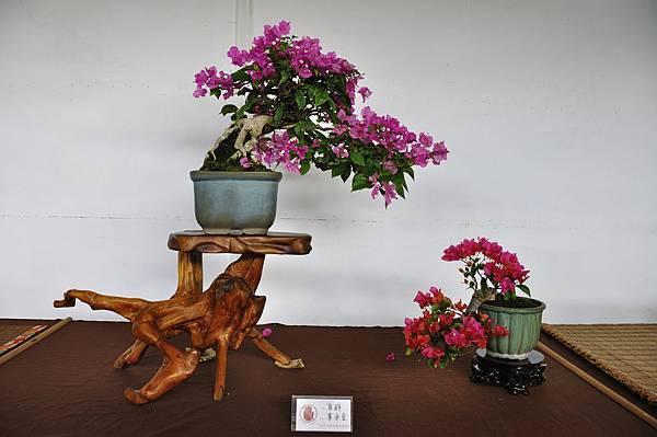 2018台中盆栽展_00186.jpg