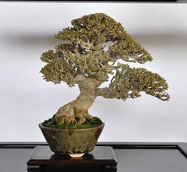 2018台中盆栽展_00007.jpg