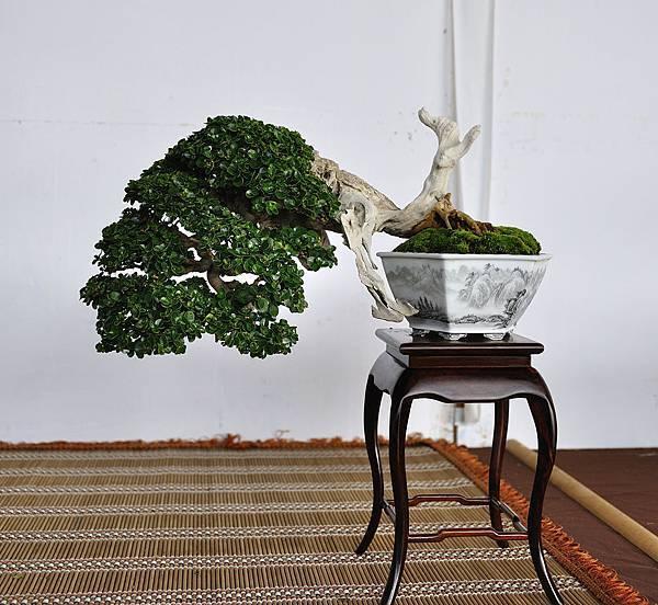 2018台中盆栽展_00011.jpg