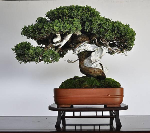 2018台中盆栽展_00024.jpg