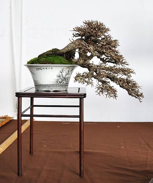 2018台中盆栽展_00029.jpg