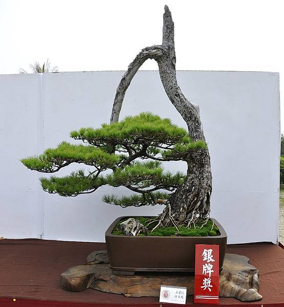 2018台中盆栽展_00034.jpg