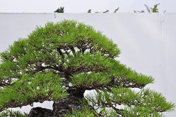 2018台中盆栽展_00056.jpg