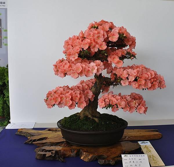 2019台中皋月杜鵑展_00006.jpg