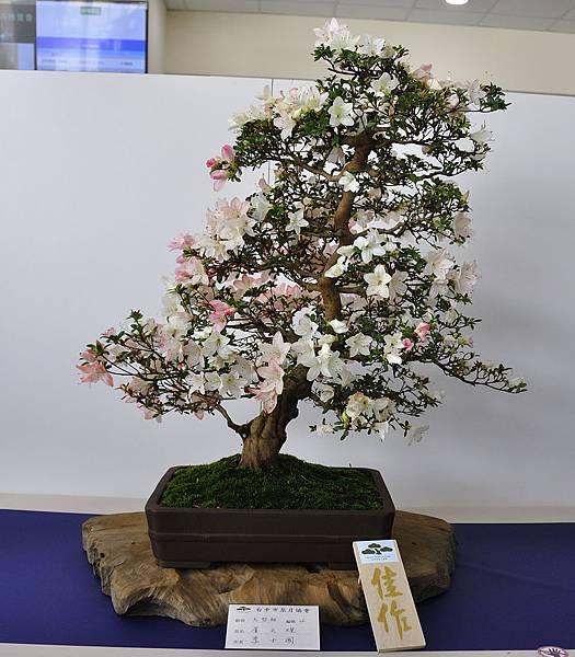 2019台中皋月杜鵑展_00007.jpg