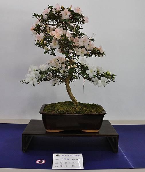 2019台中皋月杜鵑展_00015.jpg