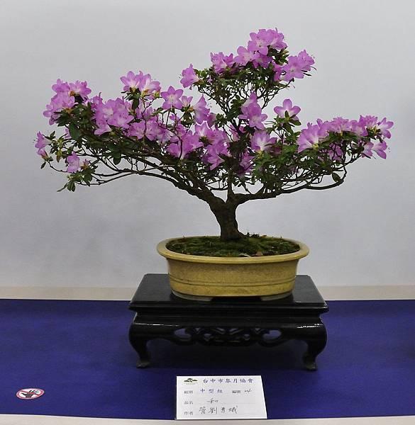 2019台中皋月杜鵑展_00017.jpg