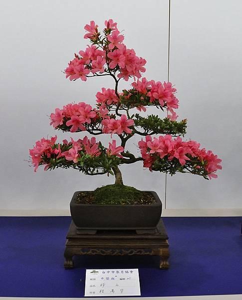 2019台中皋月杜鵑展_00019.jpg