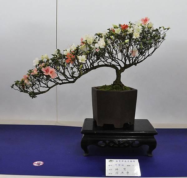 2019台中皋月杜鵑展_00021.jpg