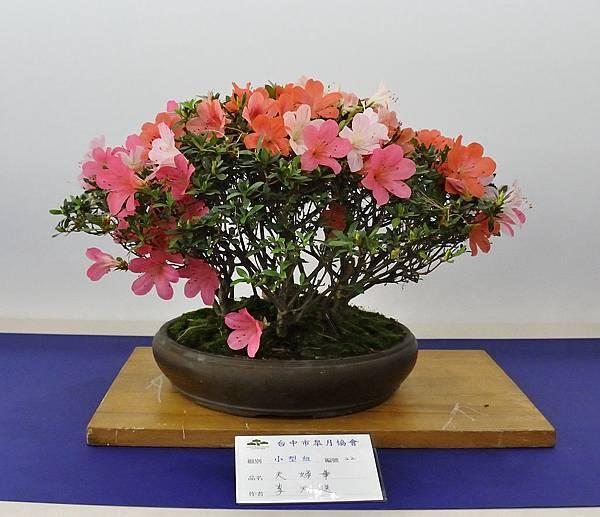 2019台中皋月杜鵑展_00025.jpg