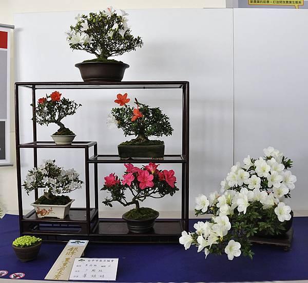 2019台中皋月杜鵑展_00027.jpg
