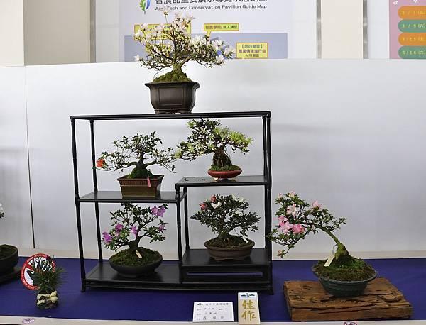 2019台中皋月杜鵑展_00034.jpg