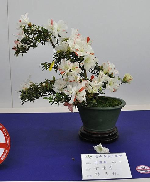 2019台中皋月杜鵑展_00043.jpg