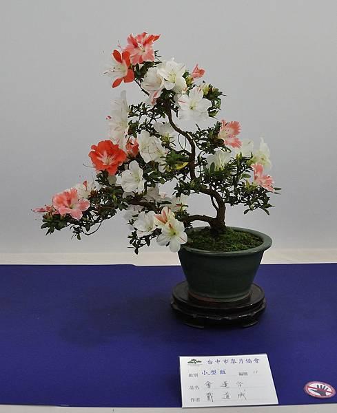2019台中皋月杜鵑展_00042.jpg