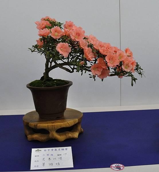 2019台中皋月杜鵑展_00044.jpg