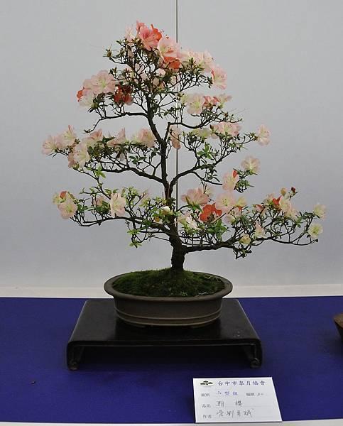 2019台中皋月杜鵑展_00047.jpg