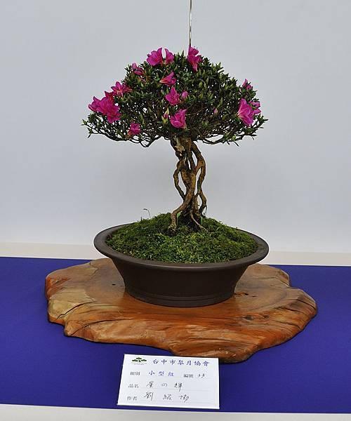 2019台中皋月杜鵑展_00060.jpg
