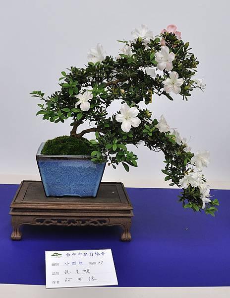 2019台中皋月杜鵑展_00062.jpg