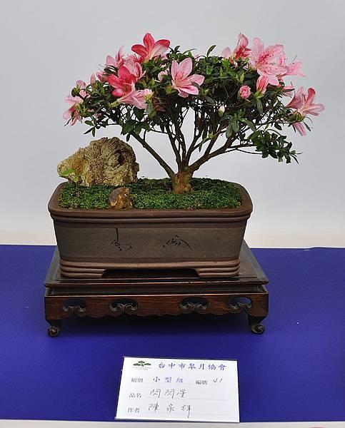 2019台中皋月杜鵑展_00065.jpg