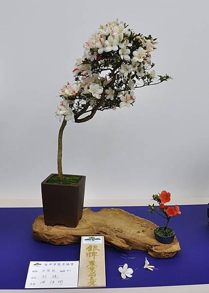 2019台中皋月杜鵑展_00066.jpg