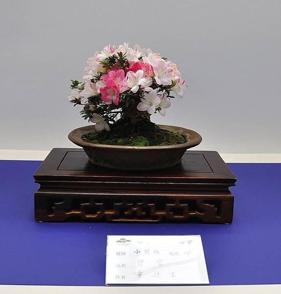 2019台中皋月杜鵑展_00076.jpg