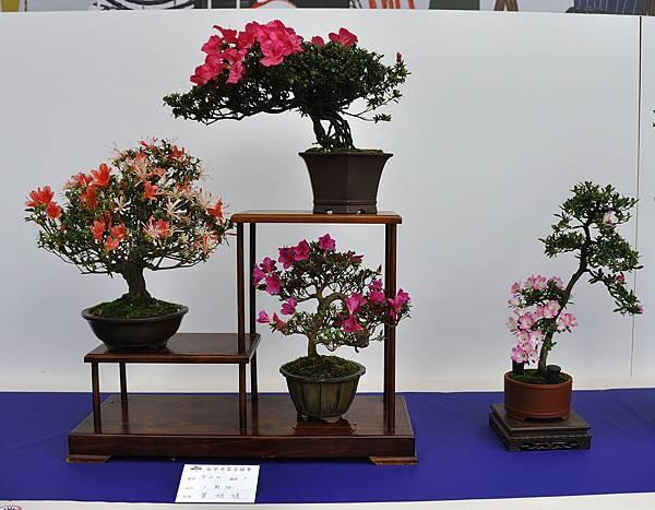 2019台中皋月杜鵑展_00083.jpg