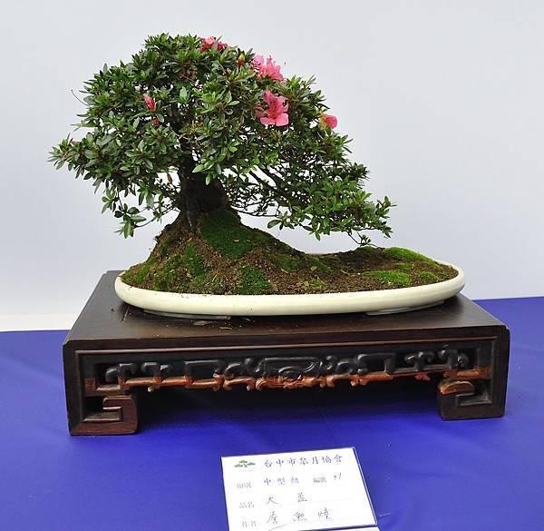 2019台中皋月杜鵑展_00084.jpg