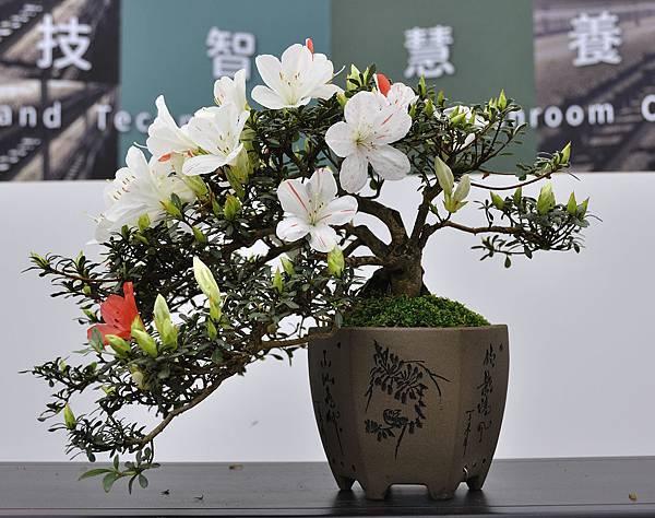 2019台中皋月杜鵑展_00094.jpg