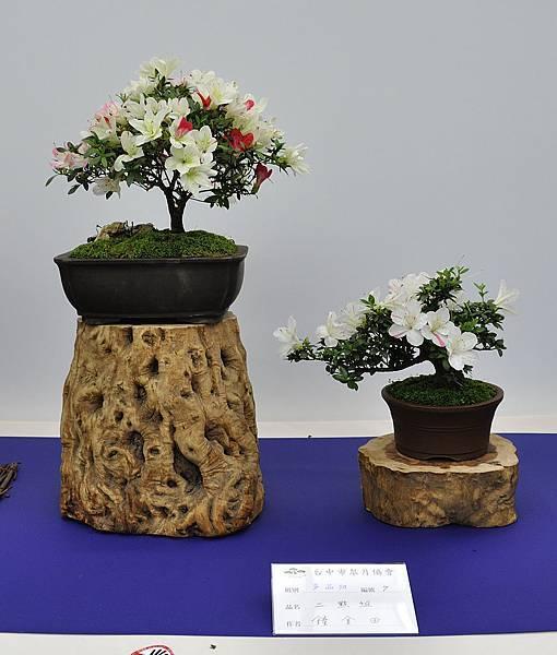 2019台中皋月杜鵑展_00101.jpg