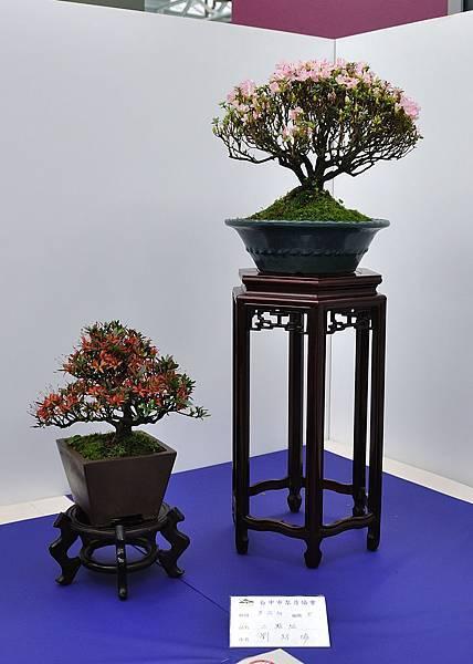 2019台中皋月杜鵑展_00104.jpg