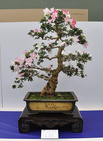 2019台中皋月杜鵑展_00105.jpg