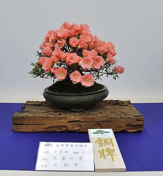 2019台中皋月杜鵑展_00114.jpg