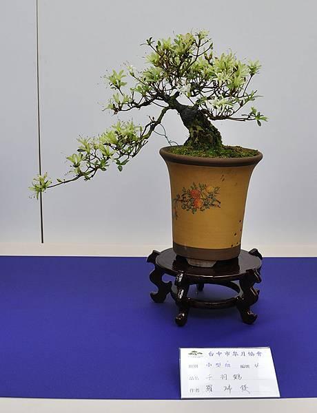 2019台中皋月杜鵑展_00116.jpg