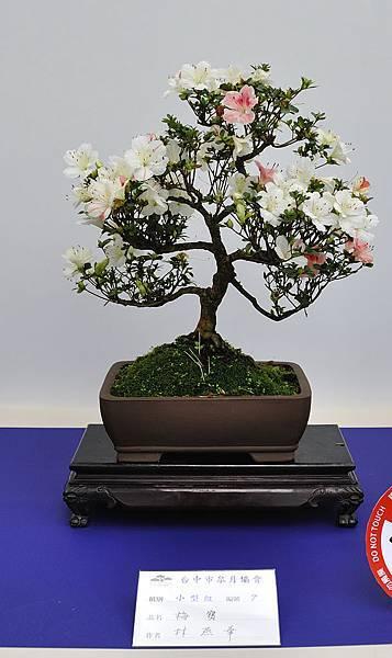 2019台中皋月杜鵑展_00119.jpg