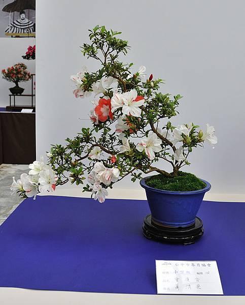 2019台中皋月杜鵑展_00124.jpg