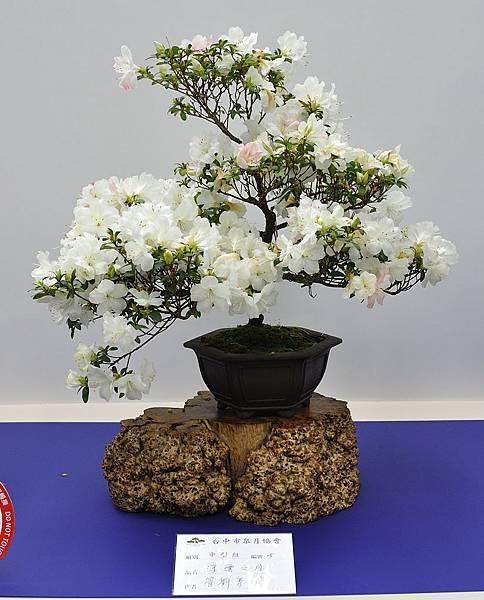 2019台中皋月杜鵑展_00129.jpg