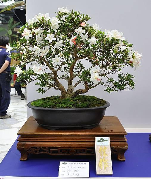 2019台中皋月杜鵑展_00134.jpg