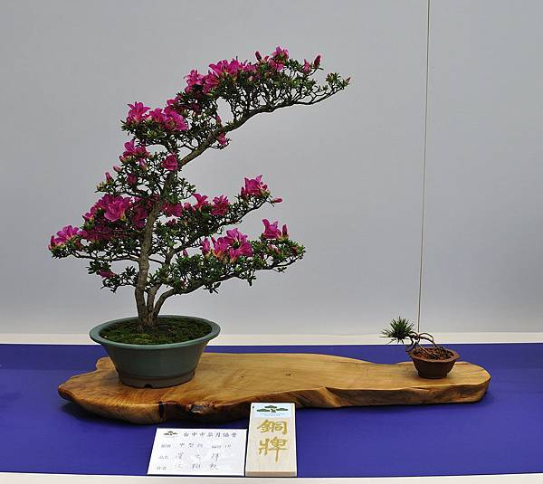 2019台中皋月杜鵑展_00141.jpg