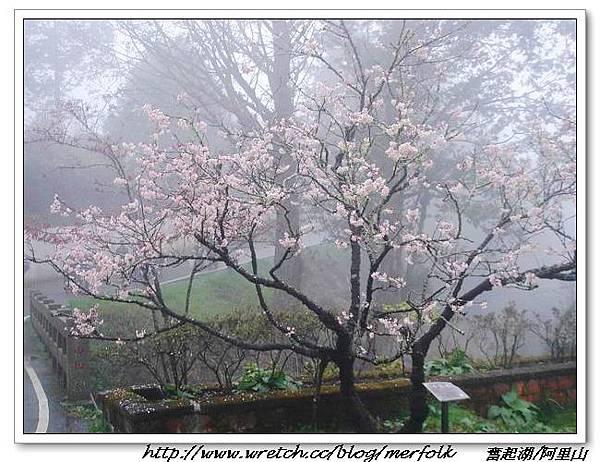 春節之旅Day1_奮起湖&阿里山 13.jpg