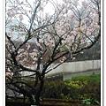 春節之旅Day1_奮起湖&阿里山 14.jpg