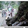 春節之旅Day1_奮起湖&阿里山 16.jpg
