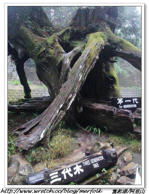 春節之旅Day1_奮起湖&阿里山 17.jpg