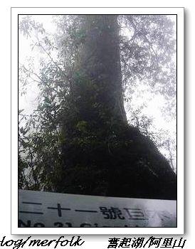 春節之旅Day1_奮起湖&阿里山 24.jpg