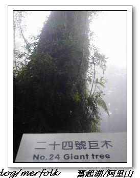 春節之旅Day1_奮起湖&阿里山 28.jpg