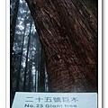 春節之旅Day1_奮起湖&阿里山 29.jpg