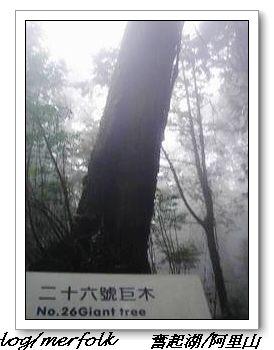 春節之旅Day1_奮起湖&阿里山 31.jpg