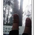 春節之旅Day1_奮起湖&阿里山 32.jpg