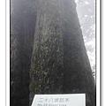 春節之旅Day1_奮起湖&阿里山 34.jpg